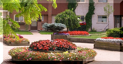 At Spring Flowers Landscaping Ltd We Realize That Is An Investment Thats Why Have A Team Of Certified Knowledgeable Professionals Who Can